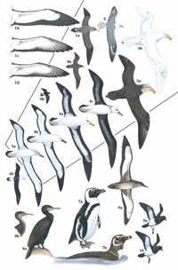 Vagrant Seabirds