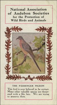 Audubon Society leaflet