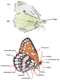 Wing Areas and Body Parts