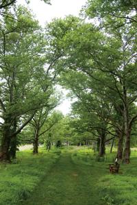 The Scott & Hella McVay Poetry Trail