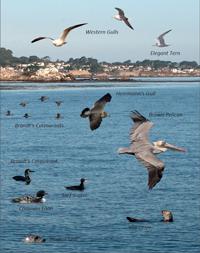 Coastal Seabirds