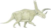 Chasmosaurus sternbergii