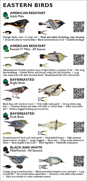 Warbler Fold-out
