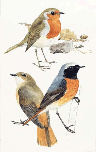 birds of bangladesh essay